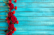 Red roses on a blue wooden background