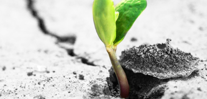 Rising sprout on dry ground.