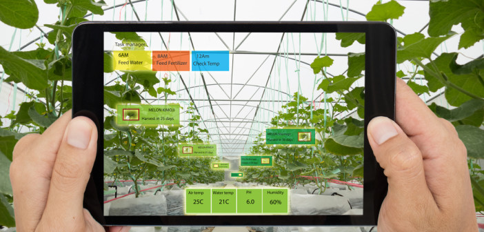 Smart agriculture concept, Agronomist or farmer use Artificial intelligence and augmented reality in farm ing