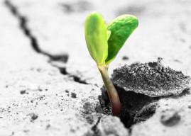 The growth mindset problem